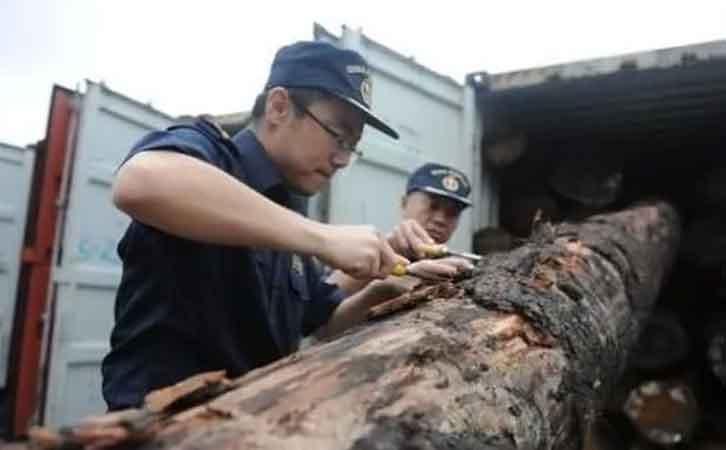 海关关员对进境木材实施现场检疫