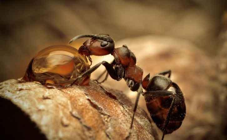 黄岛海关从克罗地亚进口木材中检出的活昆虫为检疫性害虫